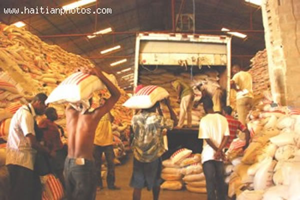Replacement of native Haitian rice with cheaper US imports