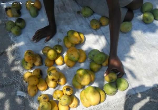 Finance For Haiti Mango Business