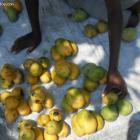 Finance For Haiti Mango Business