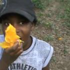 Haiti Mango Quality