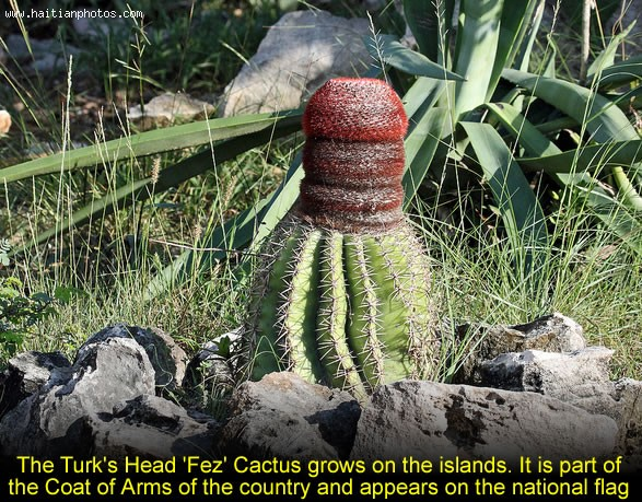 Turks And Caicos Islands Head Fez Cactus