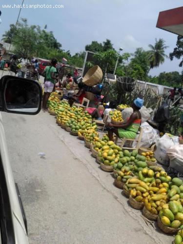 The Haitian Mango