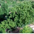View of Aquin