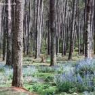 Forest des Pins Pine Forest