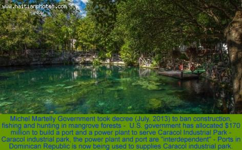 Haiti decrees ordinance to protect mangroves