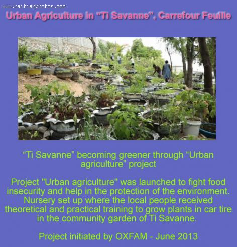 Urban Agriculture in