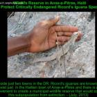Ricord's iguana in Anse-a-Pitres