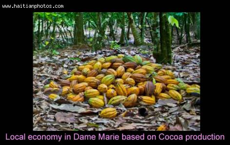 Town of Dame Marie and Cocoa