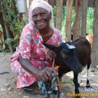 Goat, Bank account for Haitian Peasant
