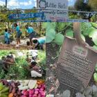 Little Haiti Community Garden