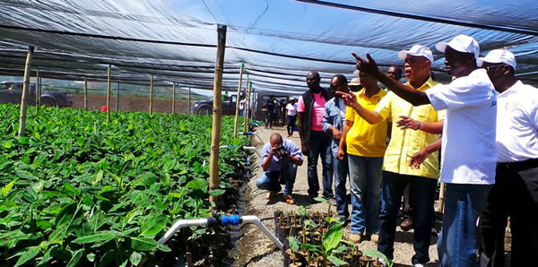 Michel Martelly and organic banana in Trou-du-Nord