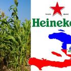 Heineken committed to buying locally sourced sorghum in Haiti