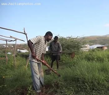 Haitian Farm Planting - Agriculture