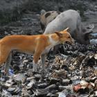 high death toll from human rabies in Haiti