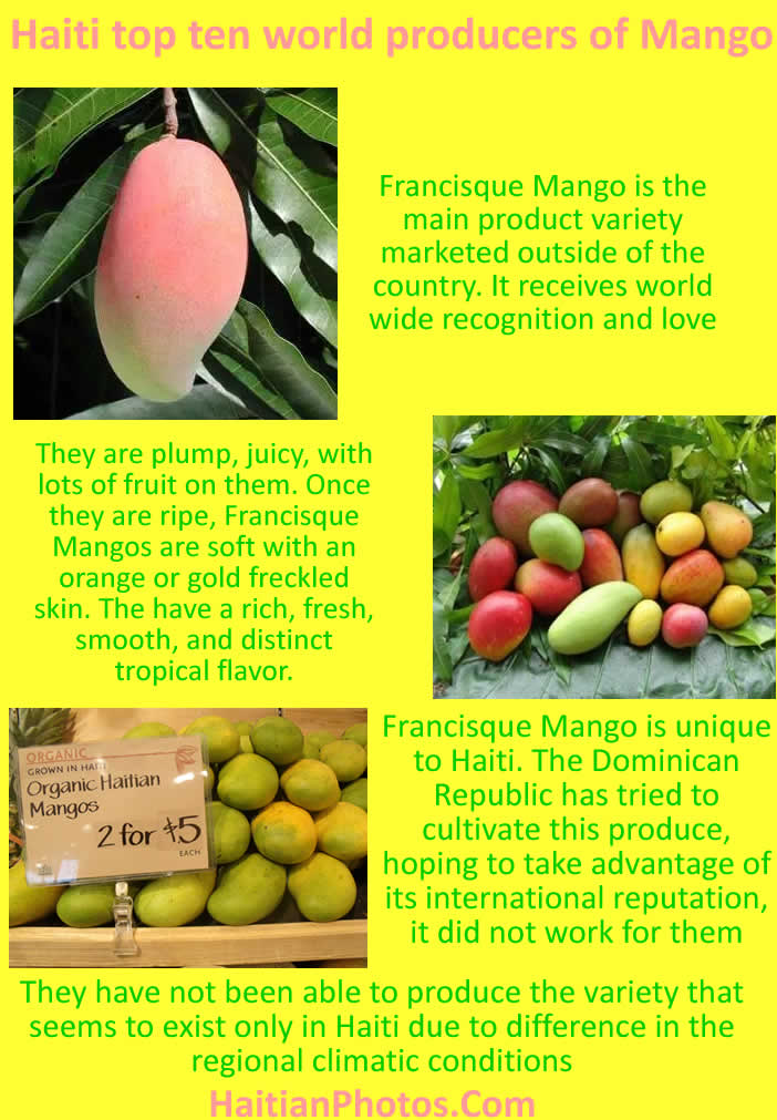 Haiti one of top ten world producers of Mango