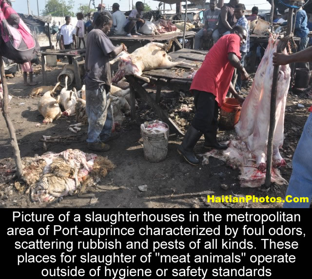 The Slaughterhouses of Croix-des-Bosales