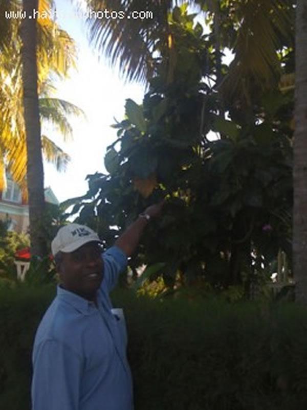 Labapin, A Popular Haitian Food Found In Key West - Haitian Food