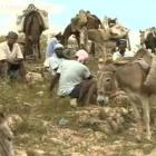 Transportation Donkey
